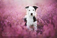 Madlene by alicjazmyslowska #animals #animal #pet #pets #animales #animallovers #photooftheday #amazing #picoftheday