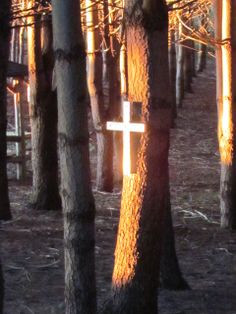 The setting sun's rays streaming through our pine trees in the back of our house and illuminating the cross (Aug. 14, 2013)