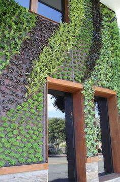 Meet the expert behind these gorgeous living walls