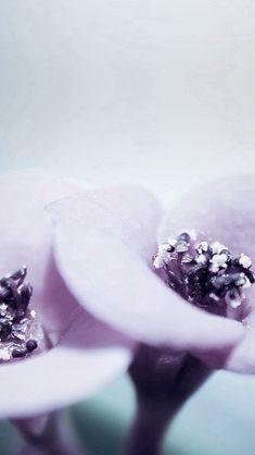 Flower Blue Purple Beautiful Rain Nature iPhone 5s wallpaper