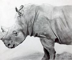 Rhino Drawing - Rhino Fine Art Print - Tina Storey