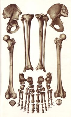 Images from Le Livre de la Sante by Joseph Handler (Monte Carlo: Andre Sauret… Skull Reference, Anatomy Reference, Anatomy Drawing, Anatomy Art, Skeleton Anatomy, Anatomy Models, Islamic Paintings, Medical Art, Science Art