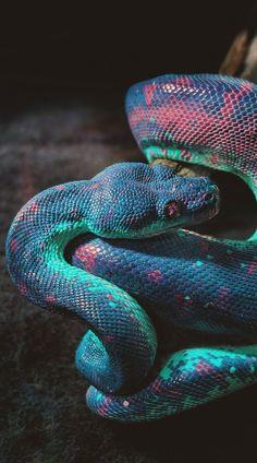 F&O Fabforgottennobility — banshy: Snake (Infrared Edit) by Thomas Hafeneth Pretty Snakes, Cool Snakes, Colorful Snakes, Beautiful Snakes, Les Reptiles, Cute Reptiles, Reptiles And Amphibians, Reptiles Preschool, Tier Wallpaper