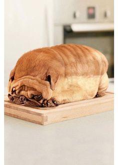 DOGLOAF! #pug #dog #fun