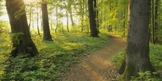 21 Jours De Méditation Avec Deepak Chopra Chopra Center, Woodland Forest, Country Roads, Nature, Plants, Image, Summer, Italia, 21 Days