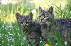 Plants That Are Used To Repel Cats