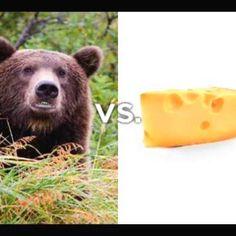 go bears vs packers   Bears vs Packers GO BEARS!   Baseball