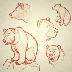 Grizzly bear sketches by Steve Rolston