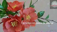 Catalina Anghel - YouTube