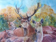 Stag and Hinds - Original Watercolour by CPascoeWatercolours on Etsy