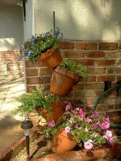 add plant, clay pots