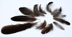 1 Dozen Black Feathers - Silky Charcoal, Taupe by Edgewood Botanica, $5.00  12 Assorted Feathers Perfect for Crafts, Jewelry Making and Hair Extensions, Organic Gray