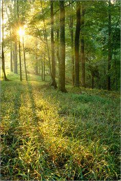 Raymond Klass - Sonnenaufgang durch Eichen- und Hickory-Wald