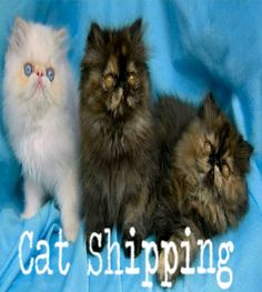 Animal shipping service and pet transport worldwide airvets pet animal shipping service and pet transport worldwide airvets pet relocation can move your animals worldwice by air and by road through usa sciox Gallery