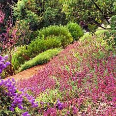 On windy, hard-to-irrigate hillsides, drought-tolerant plants tend to do best. To prevent erosion, choose plants that root tenaciously and cover the ground year-round, like 'Bee's Bliss' salvia (S. sonomensis), shown here. | Photo: Saxon Holt | thisoldhouse.com