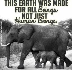 342 Best Posters/slogans - animal rights/veganism images in 2013