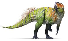 Psittacosaurus, a ceratopsian from the early Cretaceous