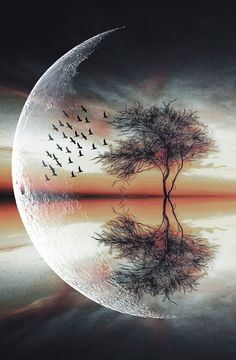 univer art, in moonlight at nature beauty Beautiful Wallpapers, Moon Art, Beautiful Nature Wallpaper, Amazing Art, Moon Photography, Fantasy Landscape, Art, Art Wallpaper, Beautiful Art