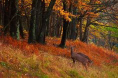twowhitetail   by RayPublishing