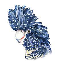 Stefan Gevers contemporary watercolour   parrots