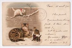 Helena Maguire Kitten Tabby Cat and A Carrot 1900s Postcard