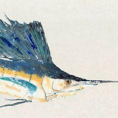 "Sailfish - ""Sail On"" - Gyotaku Fish Rubbing - Limited Edition Print (33 x 20.3) on Etsy, $95.00"
