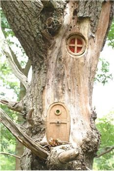 Fairy Door up in tree