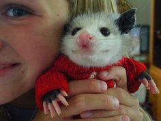 By Evangeline Barrón. A little girl from work and a little orphan opossum.