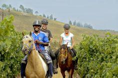 Paardrijden bij Knorhoek Wine Estate