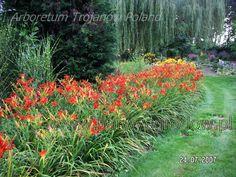 Arboretum Trojanów Poland Hemerocallis Liliowce