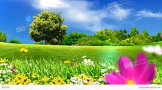 Green Meadows And Flowers Stock Animation   Royalty-Free Stock ...