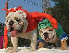 pictures of bulldogs in costumes - Google Search
