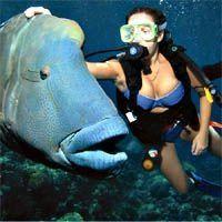 Best scuba diving vacation