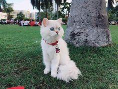 Instagram post by Salmon 🐾 • Jun 30, 2018 at 2:47pm UTC Salmon Cat, Jun, Cats, Instagram Posts, Animals, Gatos, Animales, Kitty Cats, Animaux