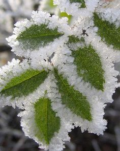 Hoar frost by jenny downing, via Flickr