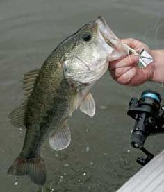This Is An Article From Game And Fish Magazine About Early Season Bass Fishing Tips