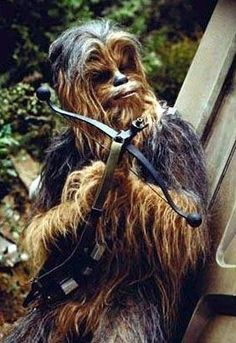Chewie #chewbacca #star #wars  May the Fourth be with you!