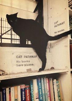 Camino de gatos, no hay libros aquí ! Nocturne, Crazy Cat Lady, Crazy Cats, Cat Memes, Cats Humor, Cat Love, Belle Photo, Cool Cats, Cats And Kittens