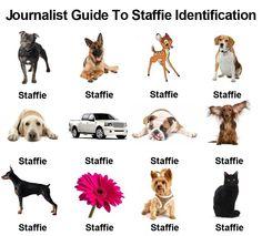Staffy identification chart