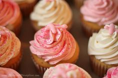 Pure Vanilla Cupcakes & Swiss Meringue Buttercream