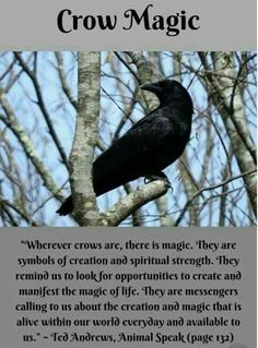 Witch Quote Challenge Crow Magic, Ted Andrews Quote If you love fantasy & dragons as much as we do, check our our canvas wraps, photo prints & tees - click that link! Witch Spell Book, Witchcraft Spell Books, Magick Spells, Crow Spirit Animal, Animal Spirit Guides, Witch Quotes, Witch Aesthetic, Animal Totems, Book Of Shadows