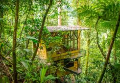 Homepage for Finca Bellavista treehouse community in Costa Rica. Make a reservation for a tree house, buy rainforest real estate, and explore the community.