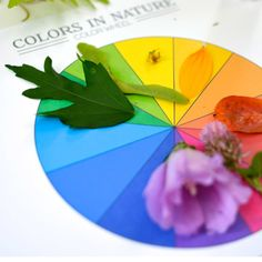 Ideias de atividades com crianças usando a natureza - folhas com cores
