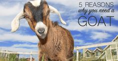 #goatvet agrees everyone should have goats if they have the right facilities