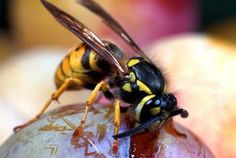 How to Kill Hornets Without Poison | Home Guides | SF Gate