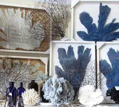 """468 Likes, 7 Comments - Sally & the Team (@coastalvintage) on Instagram: """"Our stunningly beautiful #seafans & #coraI. If interested in framed sea fans please dm. All other…"""""""
