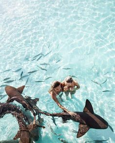 And yes, those are real sharks  in the last picture, as well as this… sometimes what doesn't seem real, actually is very, very, much real Hundreds; of different shark species, roam our oceans and play different important roles in the ecosystem....