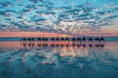 Camels on Australian beach.