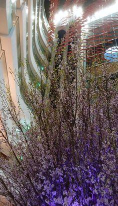 Osaka, Japan, Plants, Plant, Japanese, Planets
