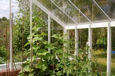 #plants #flowers #gardening #greenhouse #beautiful #gardenlandscape #gardeningideas #landscapedesign #growyourown